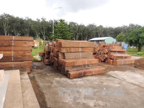 Số gỗ bị tạm giữ tại Công an huyện Ngọc Hồi. Ảnh: TTXVN