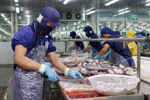 Chế biến cá tra xuất khẩu tại Công ty Biển Đông. Ảnh minh họa: TTXVN.
