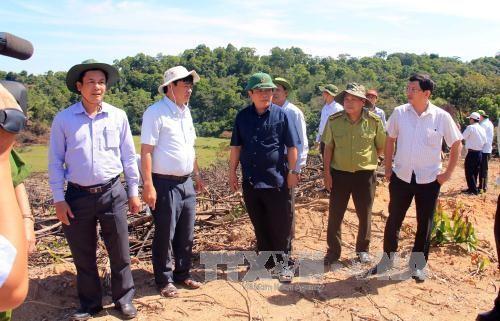 Bí thư Tỉnh ủy Bình Định Nguyễn Thanh Tùng kiểm tra hiện trường vụ phá rừng ở huyện An Lão. Ảnh: TTXVN