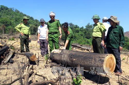 Kỷ luật một số cán bộ liên quan vụ phá rừng quy mô lớn tại Bình Định - ảnh 1