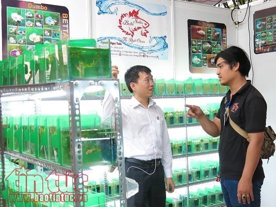 TP Hồ Chí Minh là địa phương dẫn đầu cả nước về xuất khẩu cá cảnh.