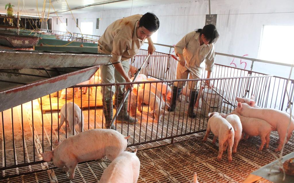 Nhiều thủ tục về Thẩm định điều kiện vệ sinh thú y sẽ được bãi bỏ - Ảnh: VGP