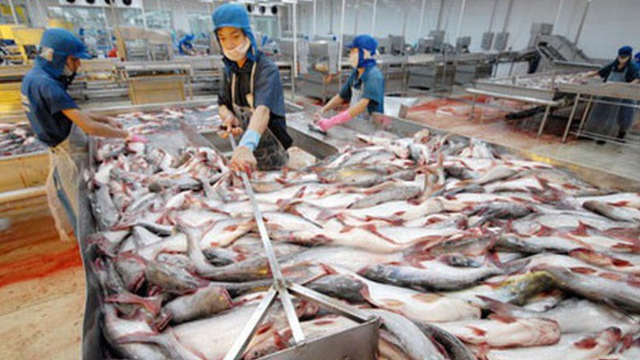 Cung không đủ cầu nên giá cá tăng cao kỷ lục.trong 20 năm qua.