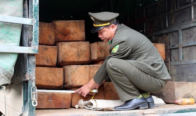 Số gỗ lậu trên xe tải bị phát hiện.