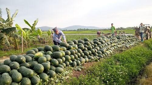 Tổ chức lại thị trường nông sản trong nước