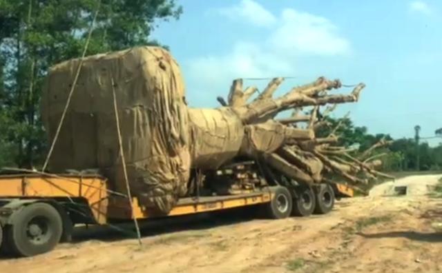 Công ty Hải Sơn và người tự xưng là chủ khối lâm sản 3 cây quái thú đang được Công an tỉnh Thừa Thiên Huế mời làm việc để phục vụ cho công tác điều tra.