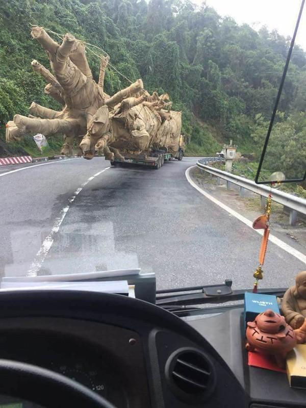 Tổ công tác đặc biệt của Cục CSGT thông tin về việc xe chở cây