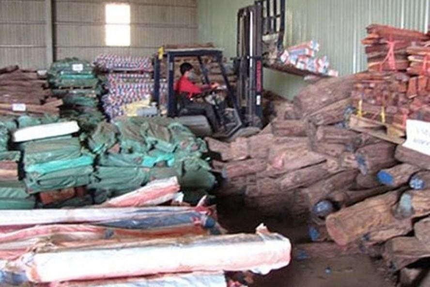 Hơn 500m3 gỗ trắc tang vật đã bị đem bán tháo khi vụ án chưa được xét xử với giá rẻ mạt (63,9 tỉ đồng). Ảnh: T.L