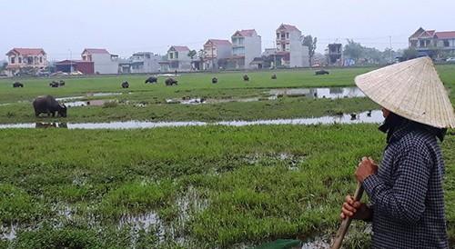 Nhiều nông dân xã Thiệu Dương bức xúc vì bị thu phí chăn thả gia súc.
