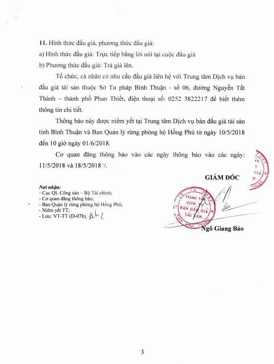 Đấu giá rừng trồng keo lai và keo lá tràm tại Bình Thuận - ảnh 3