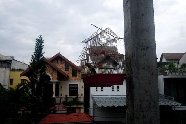 Cận cảnh nhem nhuốc của khu biệt thự bị bỏ hoang gần 10 năm giữa lòng Sài Gòn - ảnh 7