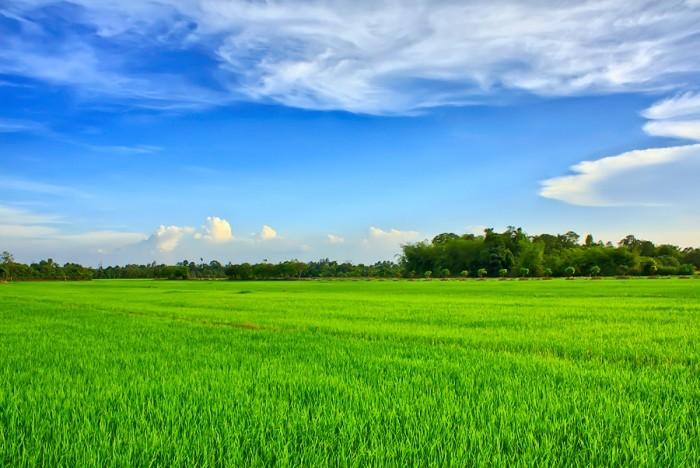Theo quy hoạch, đến năm 2020 tỉnh Sóc Trăng có 263.087 ha đất nông nghiệp, trong đó có 138.002 ha đất trồng lúa