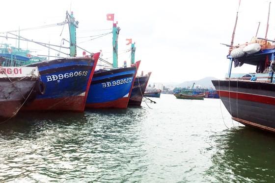 Chuyển BQL cảng cá Bình Định thành công ty CP, Nhà nước nắm giữ 65% vốn điều lệ, thực hiện trong giai đoạn 2018 - 2020. Ảnh minh họa: Internet