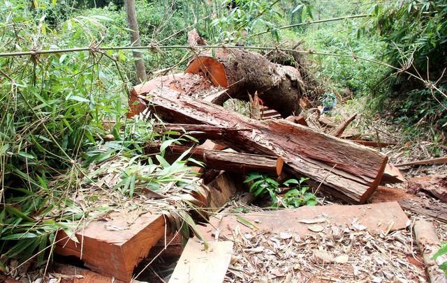 Hiện trường xảy ra vụ phá rừng ở xã Chà Vàl