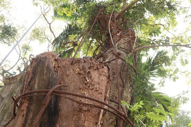 """Chi hơn 20 tỷ mua gỗ sưa đỏ, đại gia Bắc Ninh """"còng lưng"""" trả nợ suốt 8 năm - ảnh 2"""
