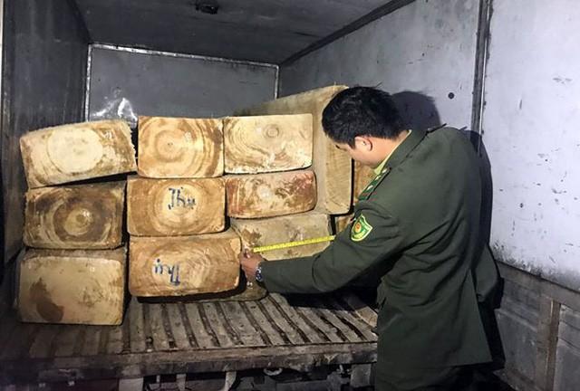 """Lực lượng chức năng đang kiểm đếm số gỗ pơ-mu """"lậu"""""""