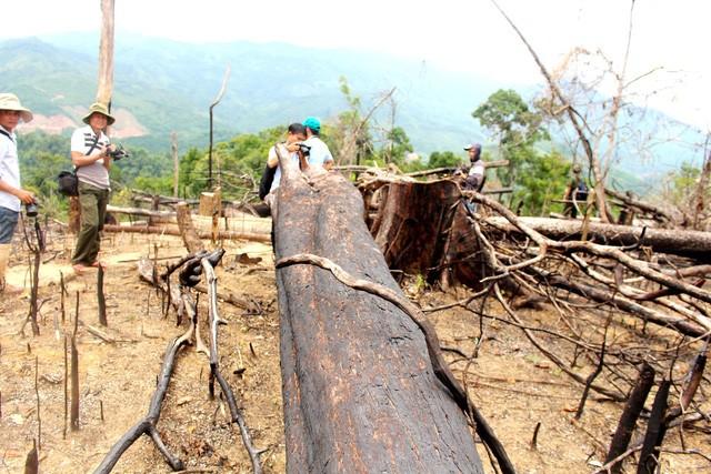 Quảng Nam: Xét xử vụ phá rừng phòng hộ quy mô lớn ở xã Tiên Lãnh - ảnh 1