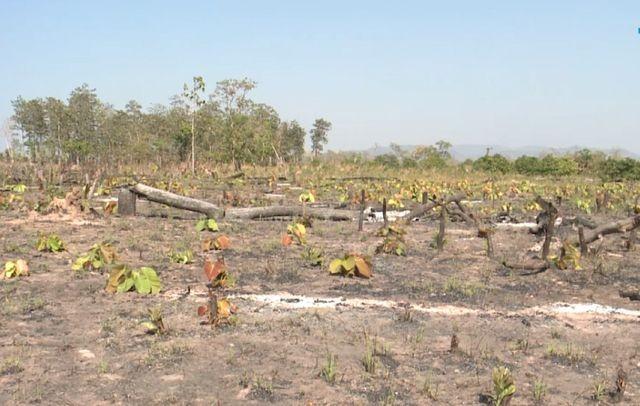 Gia Lai: Phá rừng hơn 7ha làm nương rẫy, một đối tượng bị bắt giữ - ảnh 2