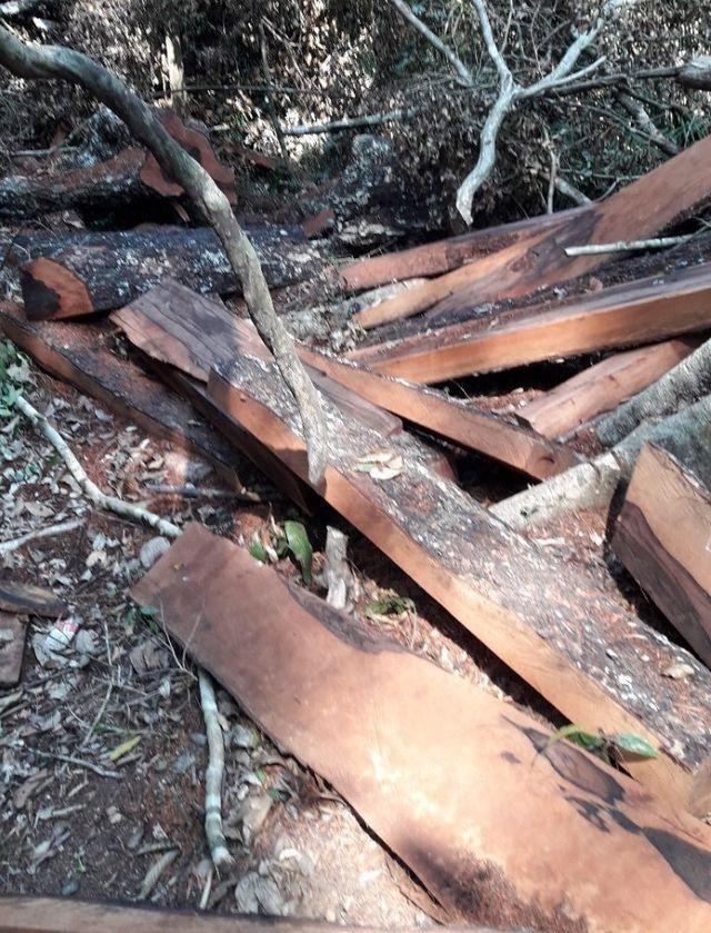 Vụ phá rừng gỗ quý ở VQG Phong Nha - Kẻ Bàng: Chuyển giao công an khởi tố vụ án - ảnh 1