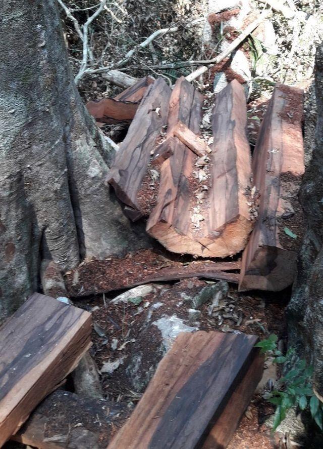 Vụ phá rừng gỗ quý ở VQG Phong Nha - Kẻ Bàng: Chuyển giao công an khởi tố vụ án - ảnh 2