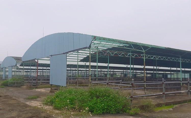 Công nhân đề xuất 'bán chuối trừ lương' ở dự án nuôi bò Bình Hà - ảnh 3