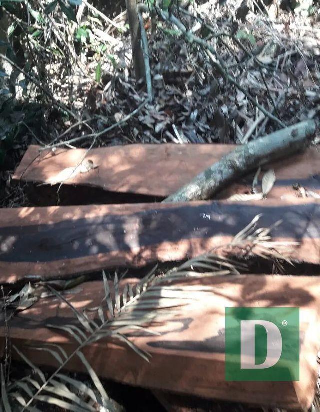 Vụ phá rừng tại VQG Phong Nha - Kẻ Bàng.