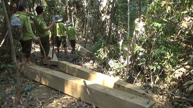 Hiện trường vụ phá rừng phòng hộ ở huyện Tây Trà