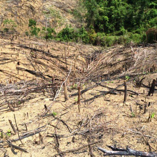 Hai cha con ở Bình Định bị khởi tố 2 cha con chặt phá 11.300 m2 rừng tự nhiên (ảnh minh họa).