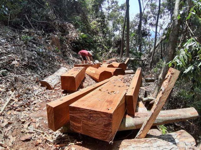 Hiện trường vụ phá rừng ở xã Cà Dy, huyện Nam Giang