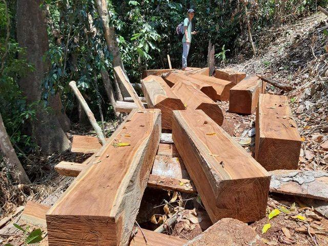 Quảng Nam: Phát hiện 2 vụ phá rừng tự nhiên - ảnh 1