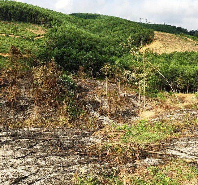 Rừng phòng hộ huyện Yên Thành, nơi nhiều cán bộ để xảy ra nhiều sai phạm.