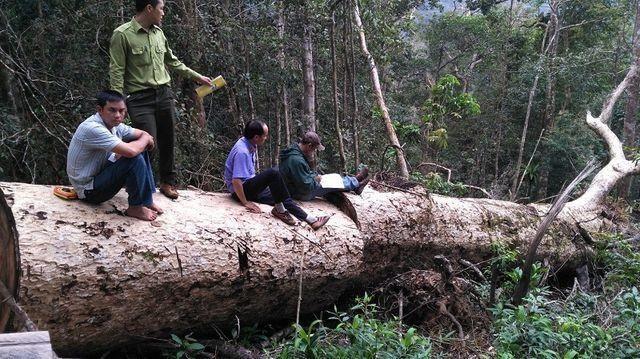 Đắk Nông: Đi chuyển gỗ tang vật, phát hiện thêm hàng chục khối gỗ quý - ảnh 1
