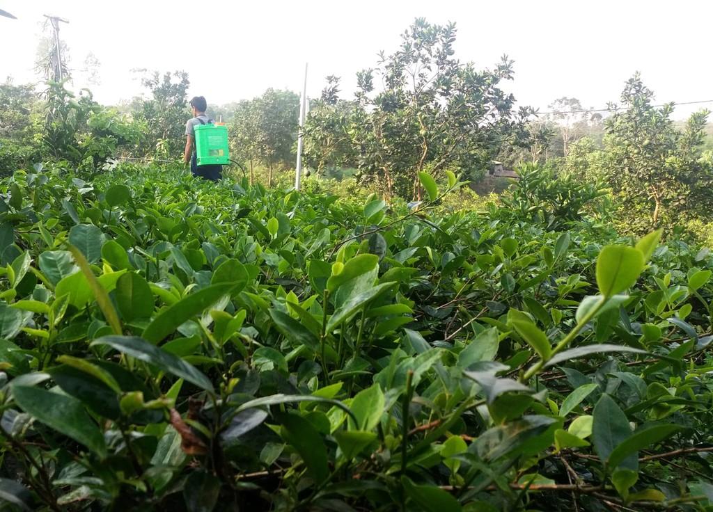 Hà Nội là 1 trong 3 địa phương còn lại chưa được phê duyệt phương án sắp xếp, đổi mới các công ty nông, lâm nghiệp. Nguồn: AMBIO