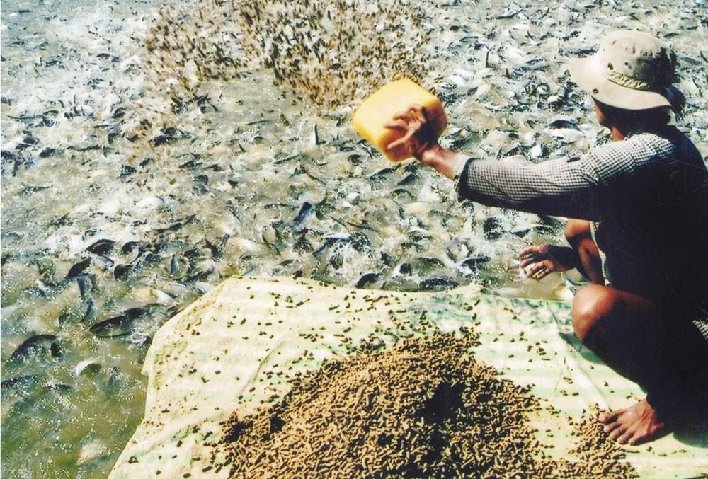 946 sản phẩm đã được nhóm cán bộ Trung tâm Khảo nghiệm, kiểm nghiệm, kiểm định nuôi trồng thủy sản hợp thức hóa để được lưu hành. Ảnh: Minh Yến