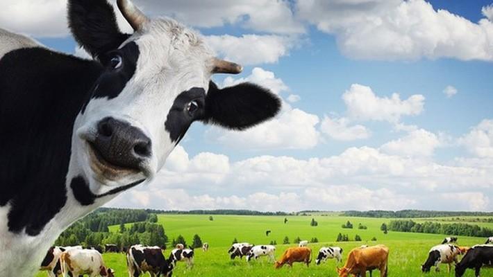 Vinamilk đang là doanh nghiệp sữa có thị phần lớn nhất Việt Nam.
