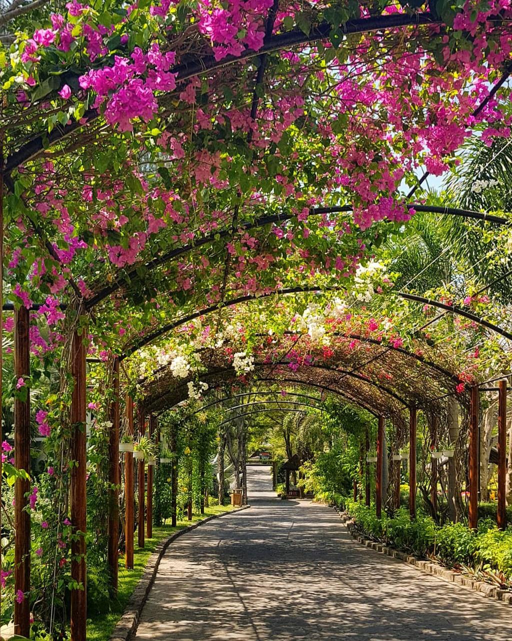 Carmelina - Khu vườn nhiệt đới bên bờ biển - ảnh 3