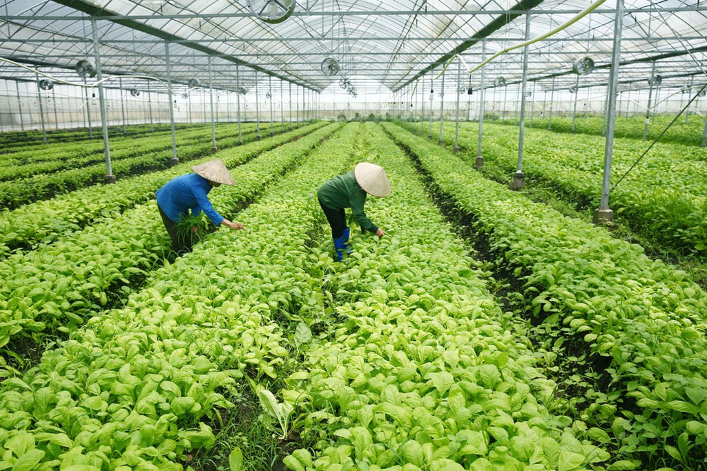 Các nhà đầu tư vào lĩnh vực nông nghiệp, nông thôn đang có cơ hội lớn tham gia thị trường tiềm năng với chi phí thấp, thủ tục ưu đãi vượt trội. Ảnh: Lê Tiên
