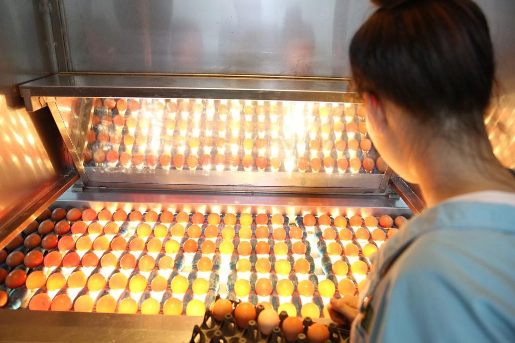 Trứng sau khi làm sạch và khử trùng bằng tia UV công nghệ châu Âu sẽ được đưa vào hệ thống soi trứng tươi, loại bỏ trứng lỗi