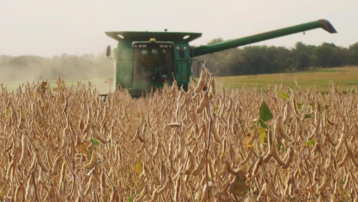 Một trang trại đậu tương ở Mỹ.