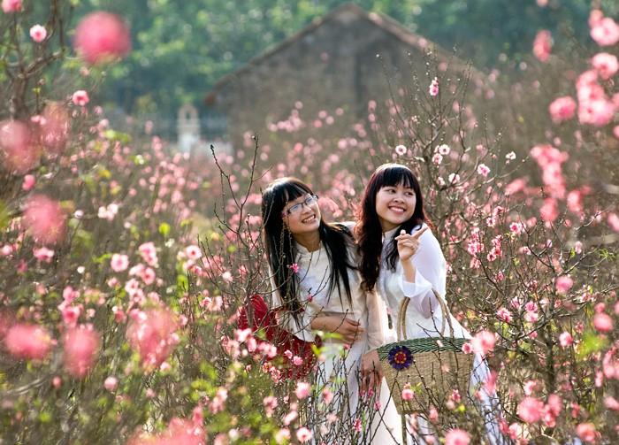 Với người Hà Nội, đào Nhật Tân vẫn luôn là nỗi nhớ tràn đầy ký ức mỗi khi Tết đến Xuân về