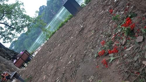 San phẳng vườn hoa trong đêm giao thừa ở Hà Nội - ảnh 4