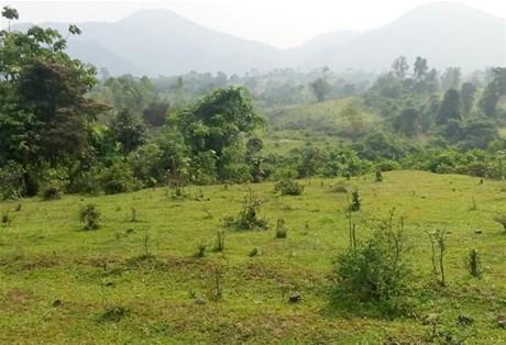 Nhiều sai phạm về quản lý đất đai tại Công ty TNHH MTV Lâm nghiệp Trà Tân (Quảng Ngãi)