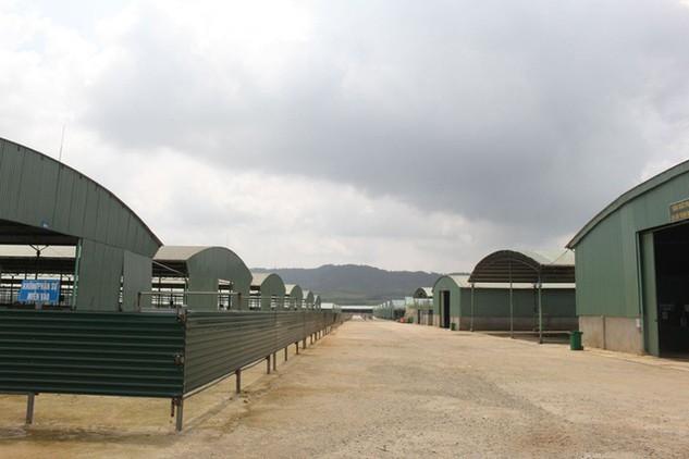 """Dự án chăn nuôi bò của Công ty Bình Hà trở thành một """"điểm đen"""" của ngành Nông nghiệp Hà Tĩnh từ vài năm qua."""