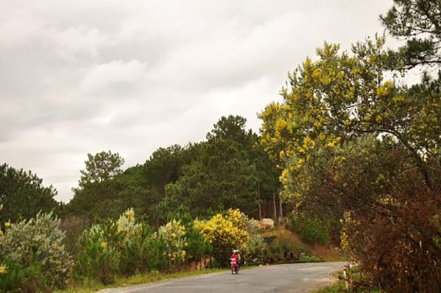 Cải tạo đường qua đèo Mimosa theo hình thức PPP