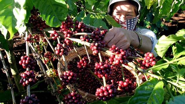 Tới 90% lượng nông sản Việt Nam XK dưới nhãn hiệu của nước ngoài, mới khoảng 50 chỉ dẫn địa lý và 140 nhãn hiệu được đăng ký xác lập, bảo hộ quyền sở hữu trí tuệ...