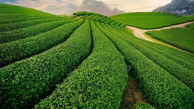 12 doanh nghiệp nông nghiệp đã hoàn tất cổ phần hóa