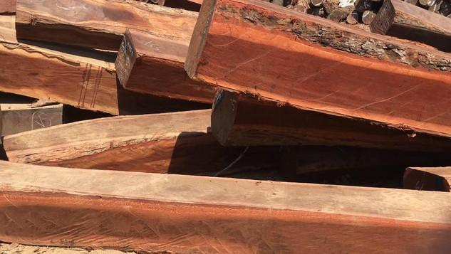 Đấu giá Lô gỗ Giổi, Xá xị, Dẻ tại Lâm Đồng