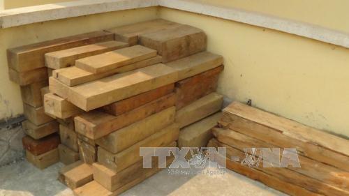 Một vụ vận chuyển gỗ lậu bị thu giữ. Ảnh: TTXVN