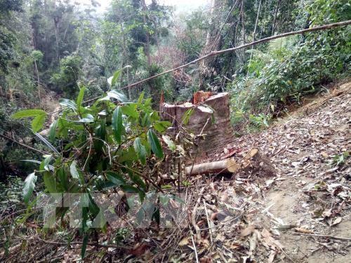 Bắc Giang xử lý 153 vụ vi phạm về bảo vệ rừng. Ảnh: TTXVN