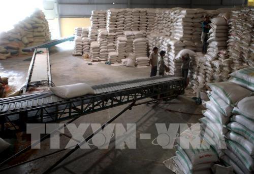 """Xuất khẩu gạo: Doanh nghiệp nhỏ mong chờ được """"cởi trói"""". Ảnh minh họa: TTXVN"""